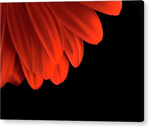 Flower Acrylic Print featuring the photograph Petals by Jessica Wakefield