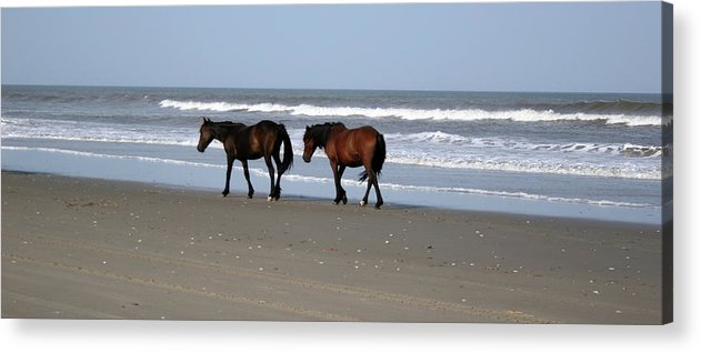 Ponies Acrylic Print featuring the photograph Palamino Ponies on the Beach by Jennifer Lycke