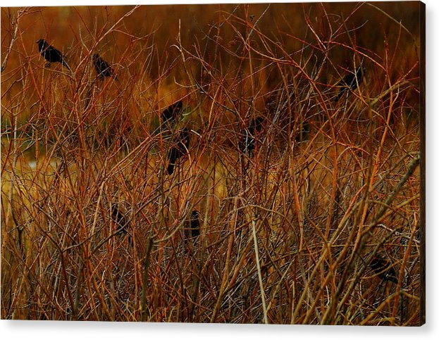 Starlings Acrylic Print featuring the photograph Starlings by Patrick Short