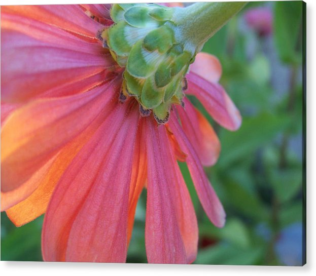 Flower Acrylic Print featuring the photograph Unseen by Sally Engdahl