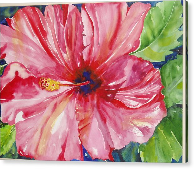 Flower Acrylic Print featuring the painting Hibiscus by Maritza Bermudez