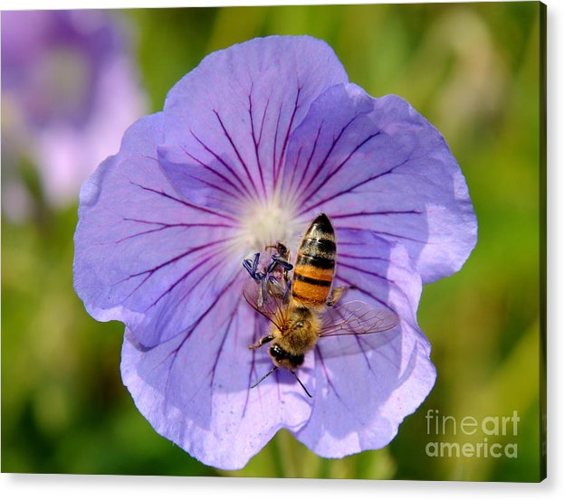 Blue Flower Acrylic Print featuring the photograph Blue Flower by Patrick Short