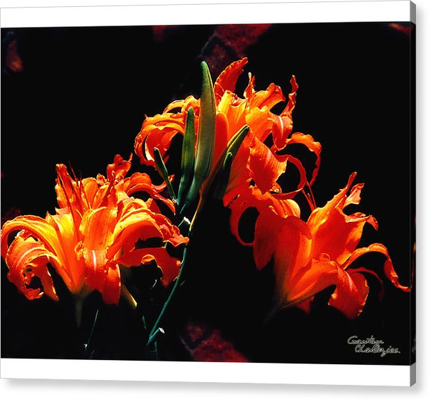 Flower Acrylic Print featuring the photograph The Flower Of Fire by Gautam Chatterjee