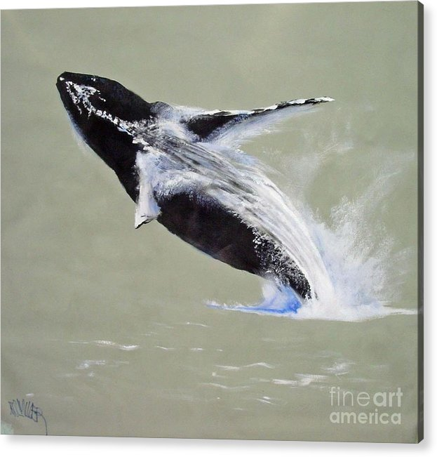 Kihei Acrylic Print featuring the painting Humpback Off Kihei Maui by Paul Miller