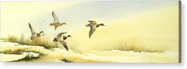Mallard Ducks Acrylic Print featuring the painting Flying Over by Lynne Parker