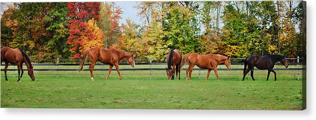 Equine Acrylic Print featuring the photograph Group Activity by Kristi Swift