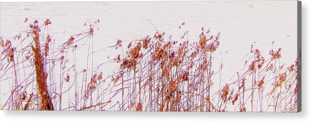 Nature Acrylic Print featuring the photograph Born Of The Light by Curtis Tilleraas