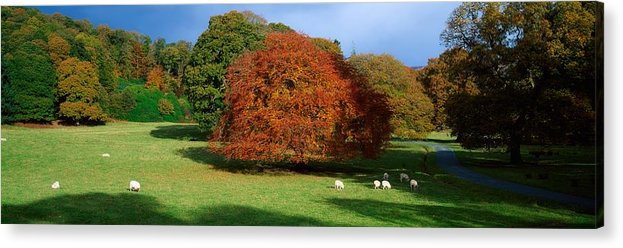 Autumn Acrylic Print featuring the photograph Beech Tree, Glendalough, Co Wicklow by The Irish Image Collection