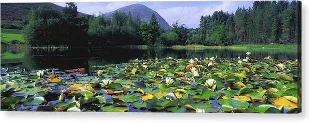 Blooming Acrylic Print featuring the photograph Silent Valley, Mourne Mountains by The Irish Image Collection
