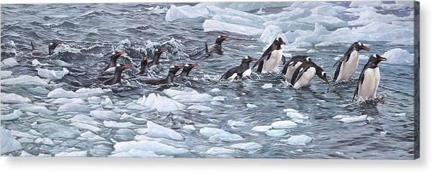 Paintings Acrylic Print featuring the painting Gentoo Penguins By Alan M Hunt by Alan M Hunt