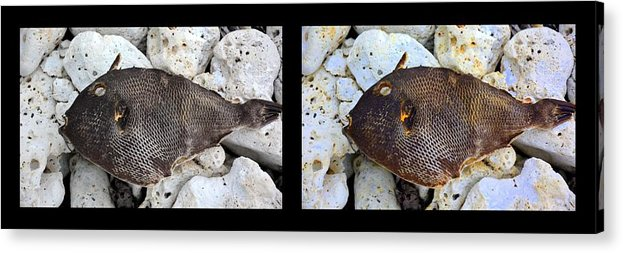 New Life Acrylic Print featuring the digital art Dead Fish Lives 5a by Doug Hoover