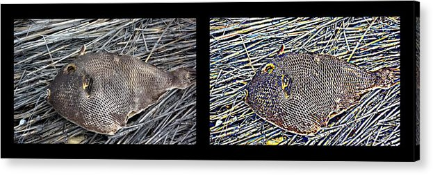 New Life Acrylic Print featuring the digital art Dead Fish Lives 66b by Doug Hoover
