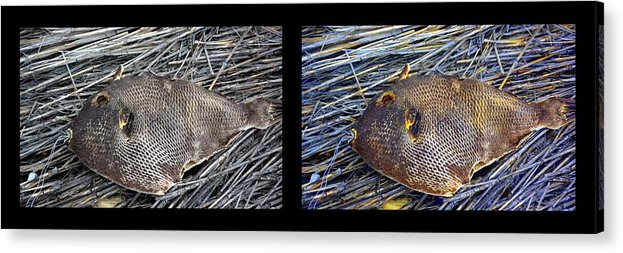 New Life Acrylic Print featuring the digital art Dead Fish Lives 6a by Doug Hoover