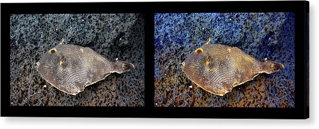 New Life Acrylic Print featuring the digital art Dead Fish Lives 9a by Doug Hoover
