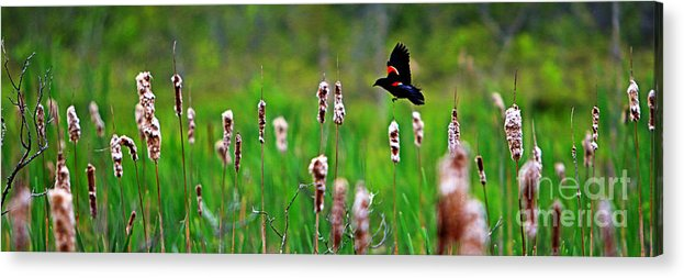 Sun Acrylic Print featuring the photograph Flying Amongst Cattails by James F Towne