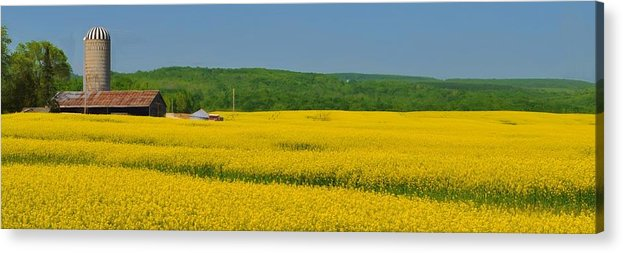 Rapeseed Acrylic Print featuring the mixed media Gold Green And Blue by Bill Willemsen
