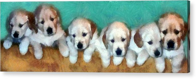 Golden Retriever Acrylic Print featuring the photograph Golden Puppies by Michelle Calkins
