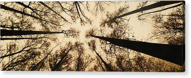 Trees Acrylic Print featuring the photograph Looking Up by Jack Paolini