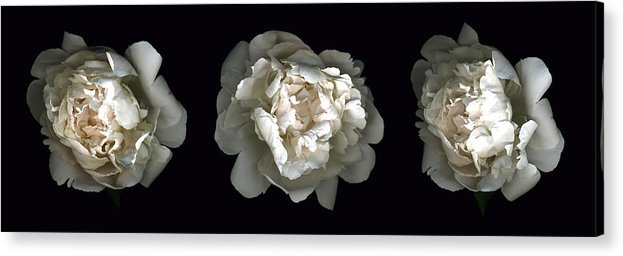 Scanography Acrylic Print featuring the photograph Peony Tryptic by Deborah J Humphries