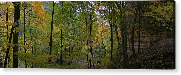 Forest Photographs Acrylic Print featuring the photograph Illinois Canyon by Gary Lobdell