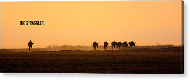 Wildebeests Acrylic Print featuring the photograph The Straggler by Amanda Stadther