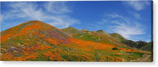 Wildflowers Acrylic Print featuring the photograph Wildflower Extravaganza by Lynn Bauer