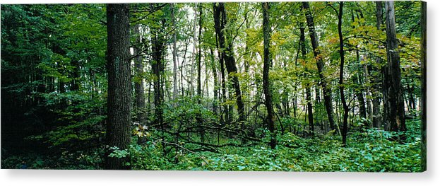 Forest Acrylic Print featuring the photograph Clearing Glimpsed 2 by Tom Hefko