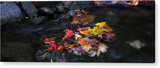 Landscape Acrylic Print featuring the photograph Maple Leaves-0001 by Sean Shaw