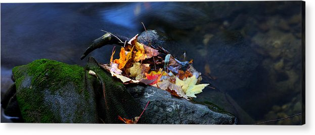 Landscape Acrylic Print featuring the photograph Maple Leaves-0004 by Sean Shaw