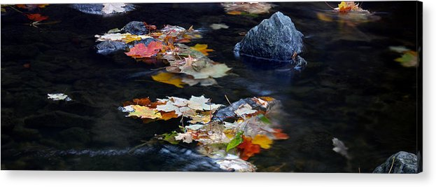 Landscape Acrylic Print featuring the photograph Maple Leaves-0005 by Sean Shaw