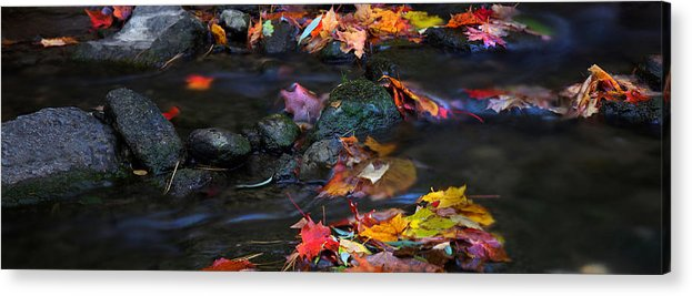 Landscape Acrylic Print featuring the photograph Maple Leaves-0009 by Sean Shaw