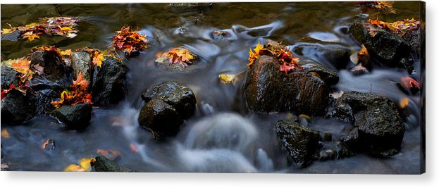 Landscape Acrylic Print featuring the photograph Maple Leaves-0003 by Sean Shaw