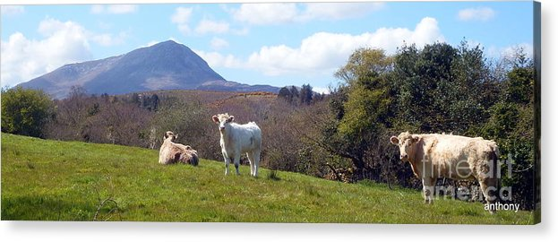 Landscape Acrylic Print featuring the photograph Under Muckish ,donegal by Anthony Gallagher