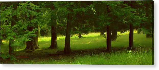 Nature Acrylic Print featuring the photograph Enchanted Forest by Linda Sannuti