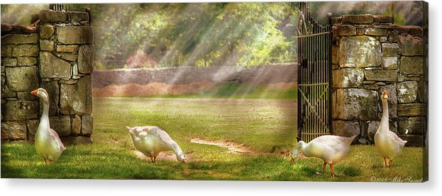 Savad Acrylic Print featuring the photograph Farm - Geese - Birds Of A Feather - Panorama by Mike Savad