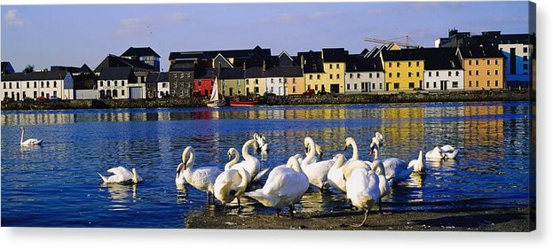 Animal Acrylic Print featuring the photograph Galway City, County Galway, Ireland by The Irish Image Collection