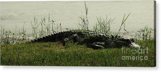 Gator Acrylic Print featuring the photograph Gator by Judy Waller