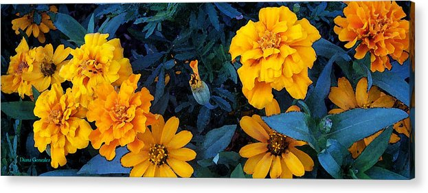 Flowers Acrylic Print featuring the painting Goldies by Diana Gonzalez