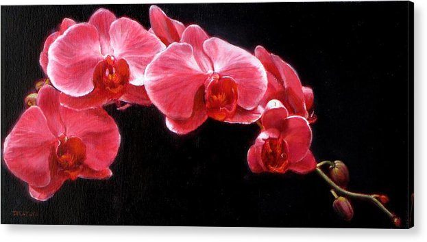 Floral Acrylic Print featuring the painting Orchids by Takayuki Harada