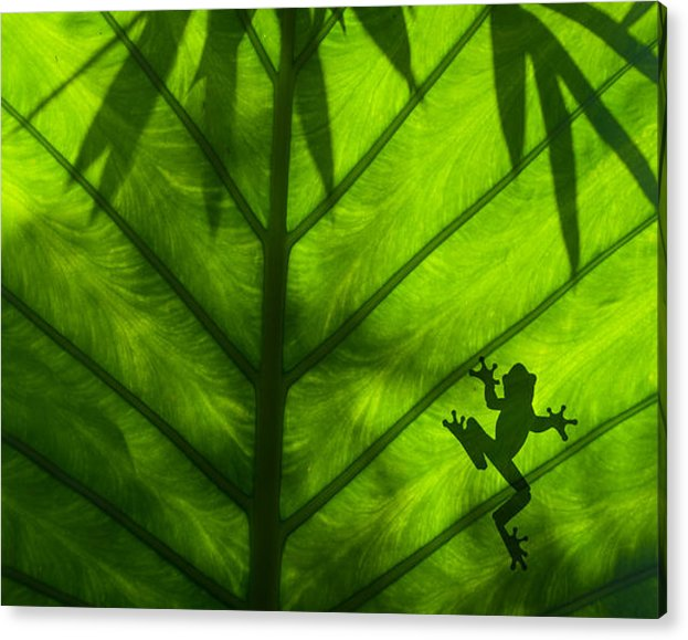 Frog on Leaf by Greg Waters