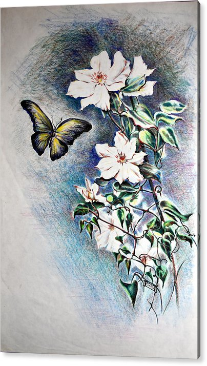 Butterfly Acrylic Print featuring the drawing Butterfly and Clematis Vine by Susan Moore
