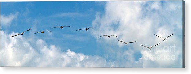 Bird Acrylic Print featuring the photograph Into The Wind by Ken Frischkorn
