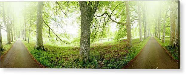 Panoramic Acrylic Print featuring the photograph Choice, Which Path To Take by Kathy Collins