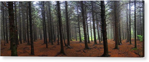 Acrylic Print featuring the photograph Forest by Judy Waller