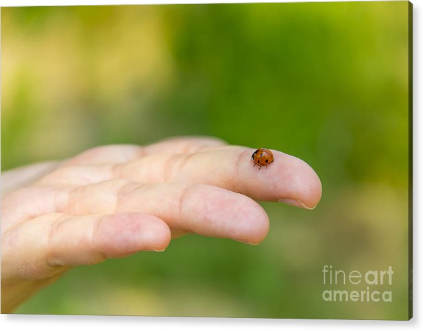 Macro Acrylic Print featuring the photograph Ladybug In An Hand by Stefano Piccini