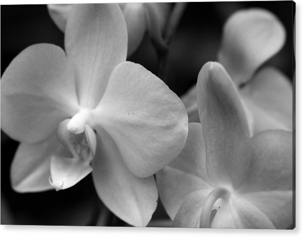 Orchid Acrylic Print featuring the photograph Starlight by Sally Engdahl