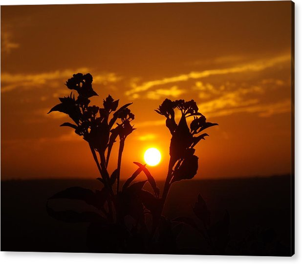 Acrylic Print featuring the photograph A Weed Sunset by Rebecca Cearley
