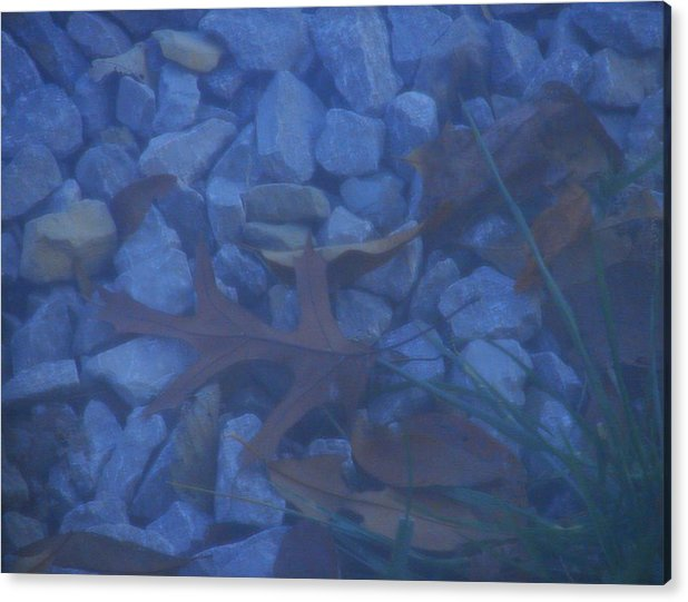 Acrylic Print featuring the photograph Blue Leaf by Luciana Seymour