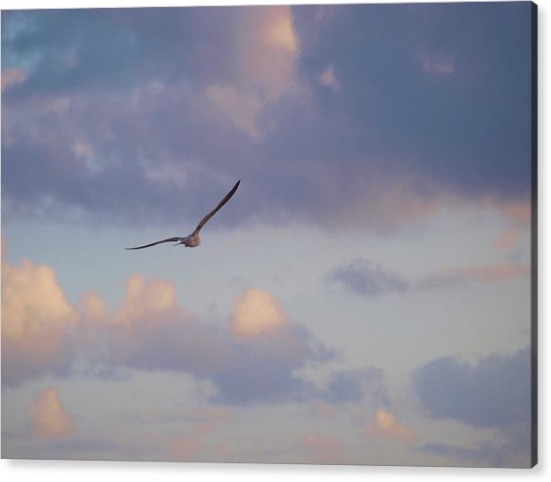 America Acrylic Print featuring the photograph Flying Away by E Luiza Picciano