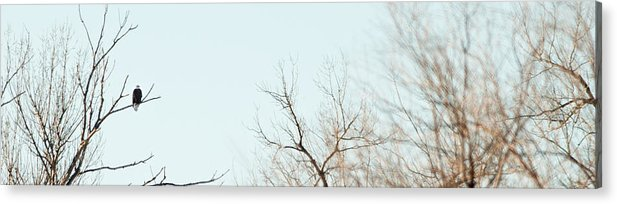 American Bald Eagle Trees Cold Outdoors Nature Rural Freedom Security Bird Roost South Dakota Raptor Symbol Patriotic Midwest Acrylic Print featuring the photograph Guardian by Patrick Ziegler